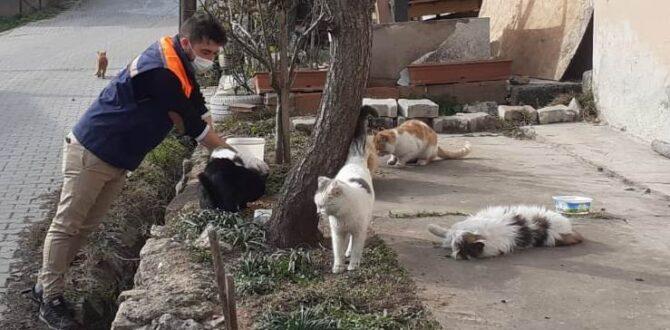 Safranbolu Belediyesi Hafta Sonları Sokak Hayvanlarını Unutmuyor
