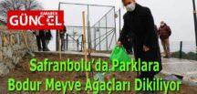 Safranbolu'da Parklara Bodur Meyve Ağaçları Dikiliyor