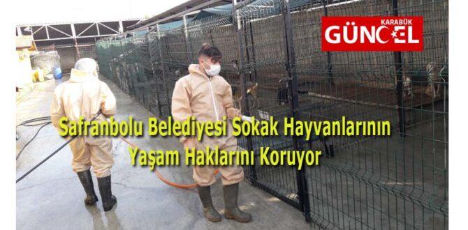 Safranbolu Belediyesi Sokak Hayvanlarının Yaşam Haklarını Koruyor