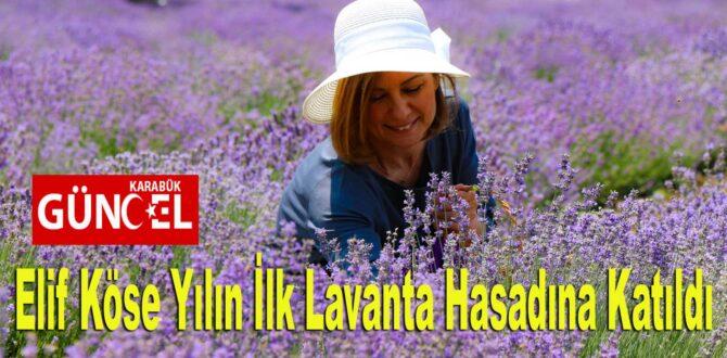 Safranbolu Belediye Başkanı Elif Köse Yılın İlk Lavanta Hasadına Katıldı