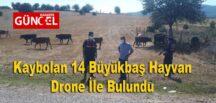 Kaybolan 14 Büyükbaş Hayvan Drone İle Bulundu